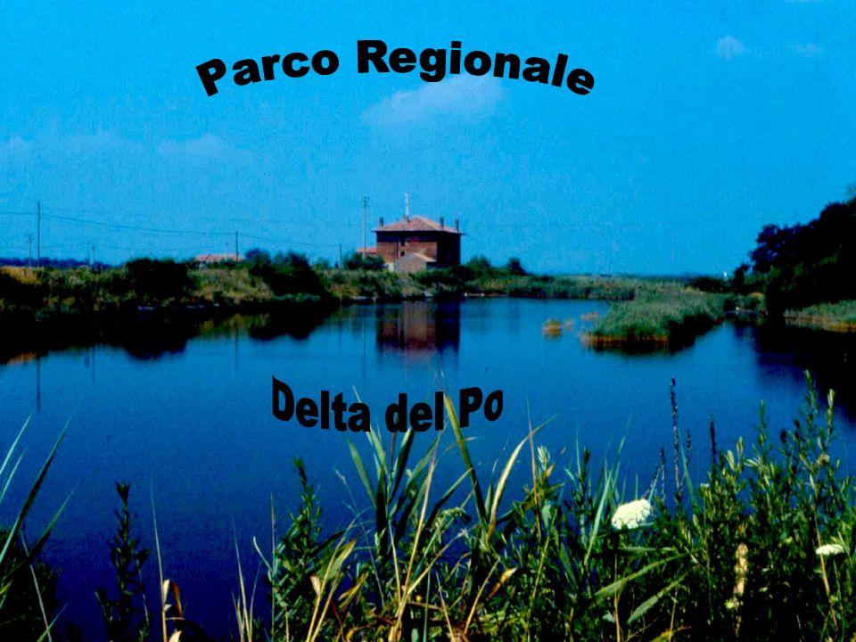 Parco Regionale Delta del Po