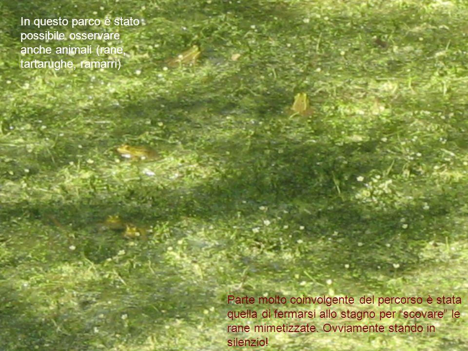 In questo parco è stato possibile osservare anche animali (rane, tartarughe, ramarri)