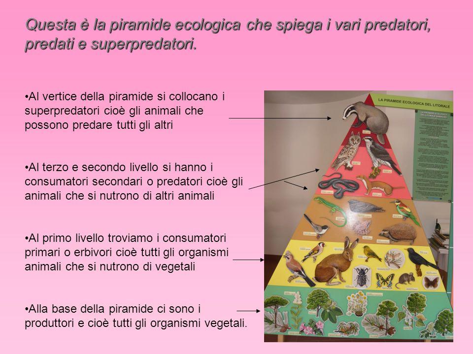 Questa è la piramide ecologica che spiega i vari predatori, predati e superpredatori.