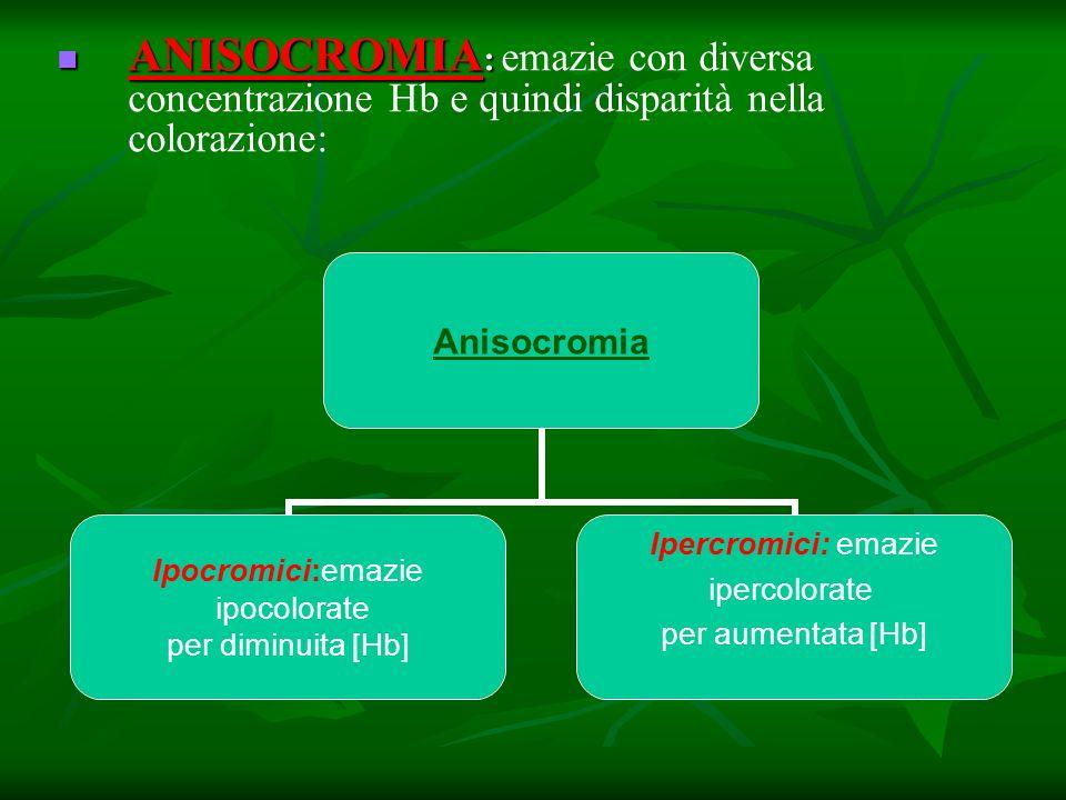 ANISOCROMIA: emazie con diversa concentrazione Hb e quindi disparità nella colorazione: