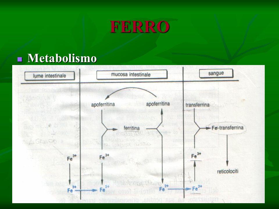 FERRO Metabolismo