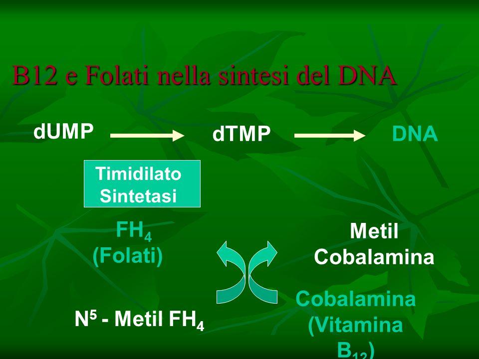 B12 e Folati nella sintesi del DNA