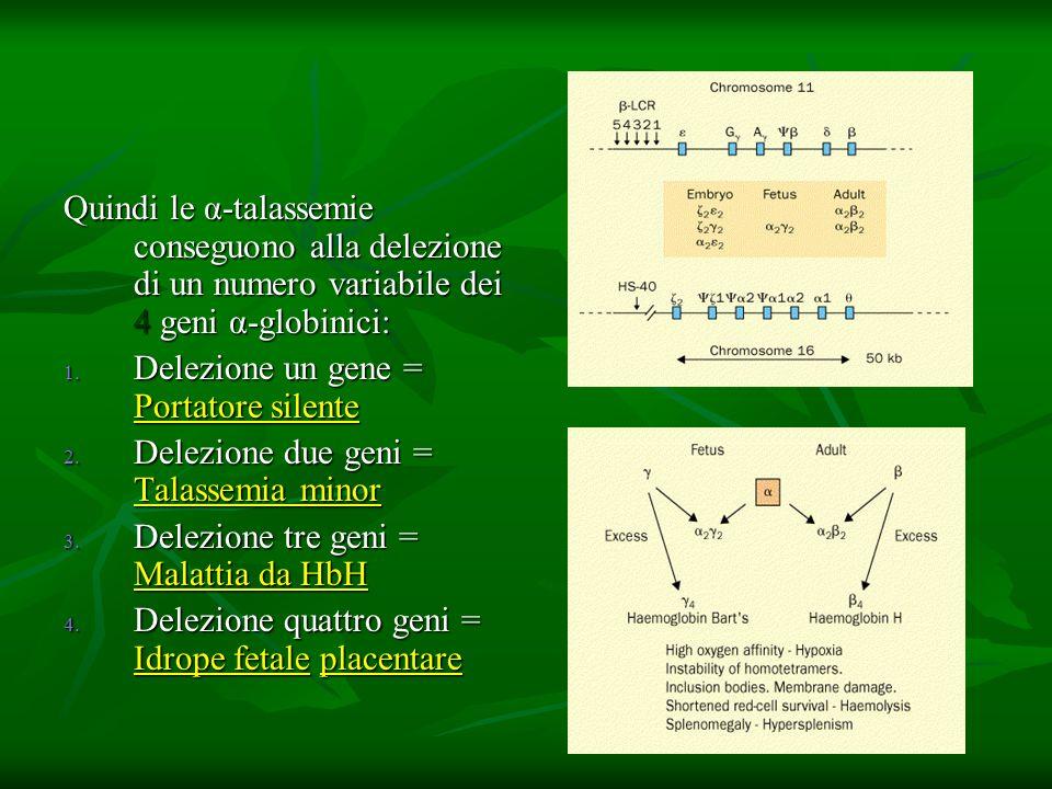 Quindi le α-talassemie conseguono alla delezione di un numero variabile dei 4 geni α-globinici: