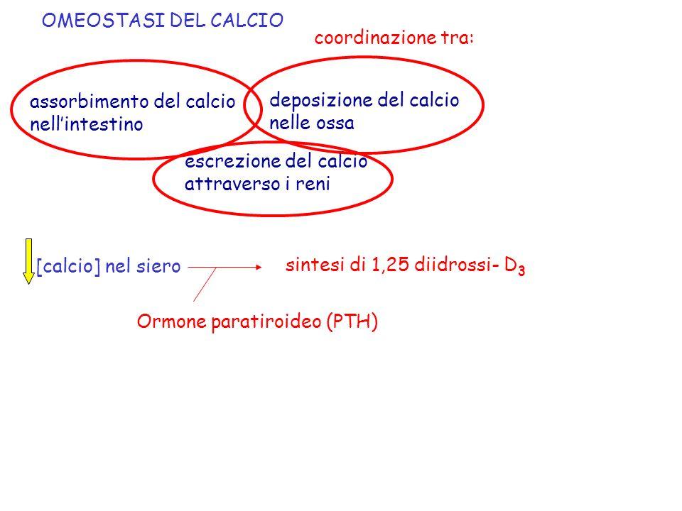 OMEOSTASI DEL CALCIO coordinazione tra: assorbimento del calcio. nell'intestino. deposizione del calcio.
