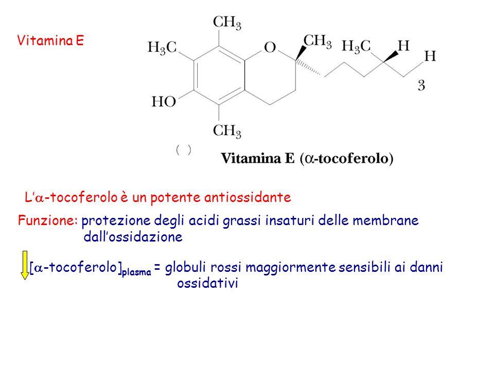 Vitamina E L'a-tocoferolo è un potente antiossidante. Funzione: protezione degli acidi grassi insaturi delle membrane.