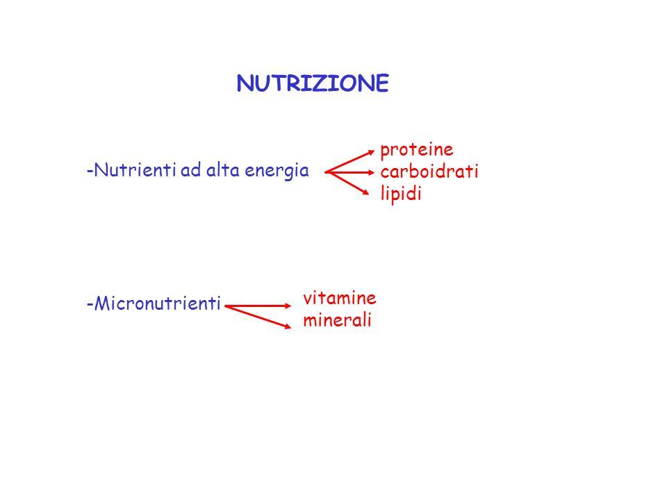 NUTRIZIONE proteine carboidrati Nutrienti ad alta energia lipidi