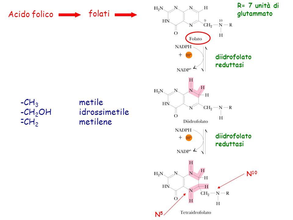 Acido folico folati -CH3 metile CH2OH idrossimetile CH2 metilene -
