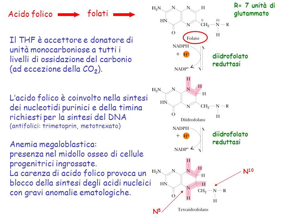 Il THF è accettore e donatore di unità monocarboniose a tutti i