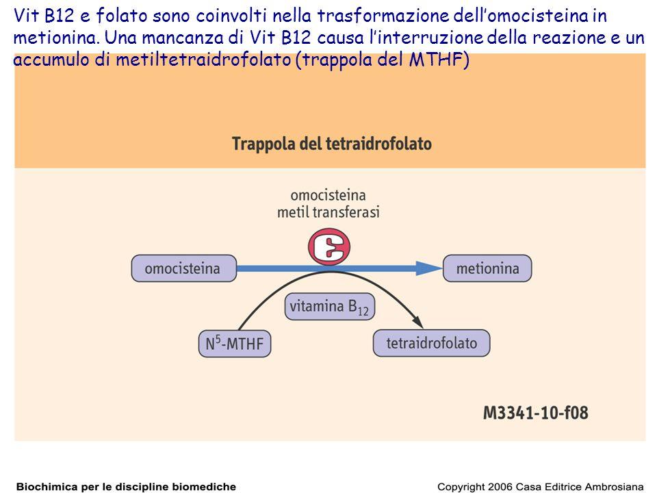 Vit B12 e folato sono coinvolti nella trasformazione dell'omocisteina in