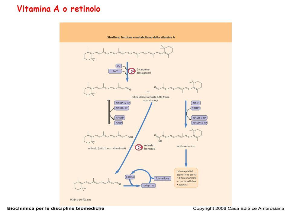 Vitamina A o retinolo