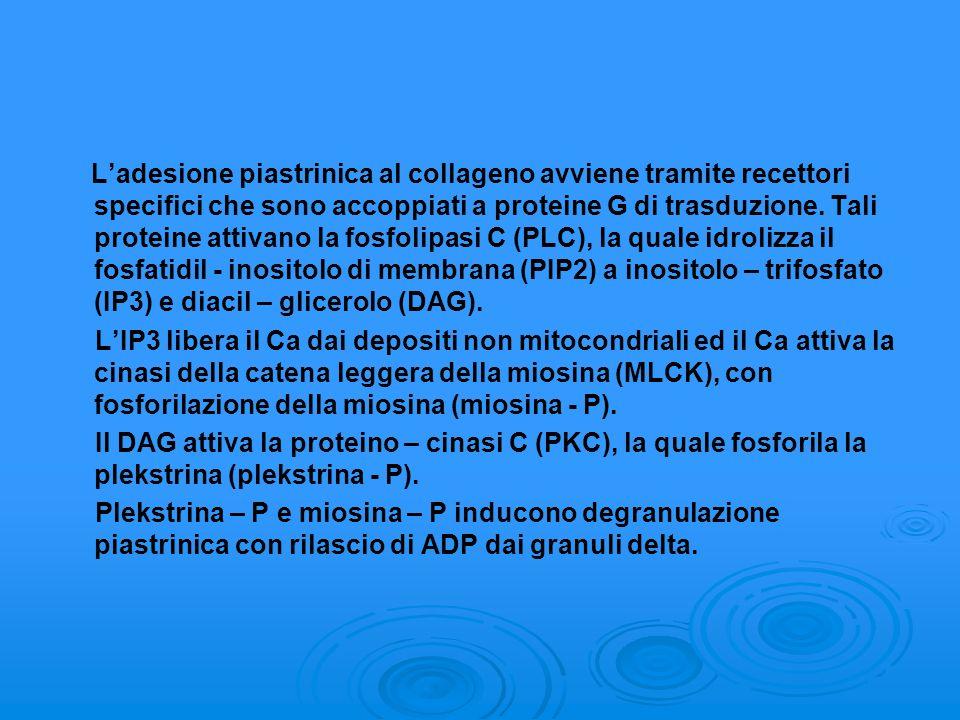 L'adesione piastrinica al collageno avviene tramite recettori specifici che sono accoppiati a proteine G di trasduzione. Tali proteine attivano la fosfolipasi C (PLC), la quale idrolizza il fosfatidil - inositolo di membrana (PIP2) a inositolo – trifosfato (IP3) e diacil – glicerolo (DAG).