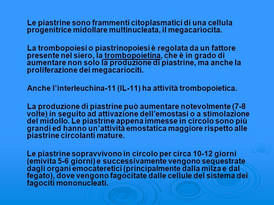 Le piastrine sono frammenti citoplasmatici di una cellula progenitrice midollare multinucleata, il megacariocita.