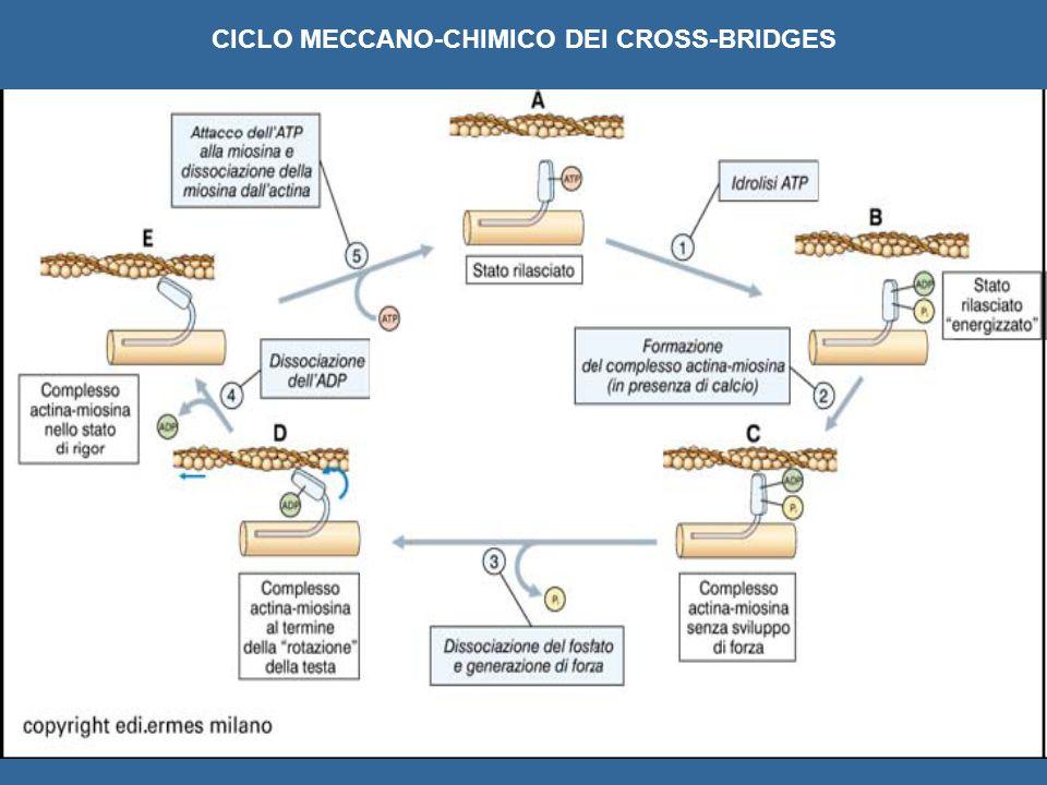 CICLO MECCANO-CHIMICO DEI CROSS-BRIDGES