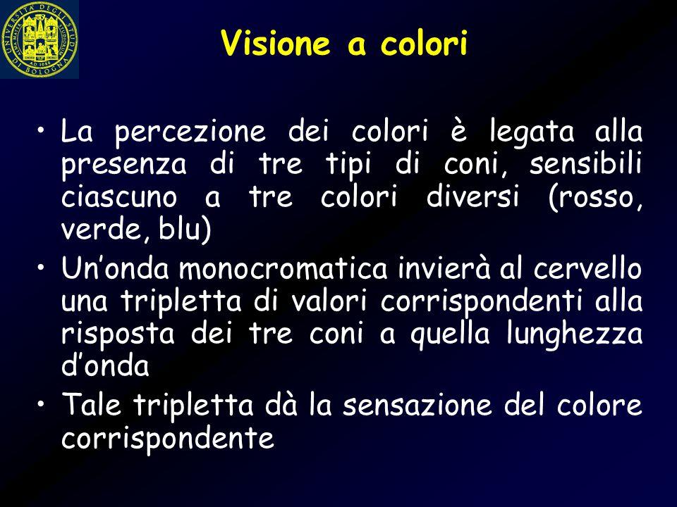 Visione a colori La percezione dei colori è legata alla presenza di tre tipi di coni, sensibili ciascuno a tre colori diversi (rosso, verde, blu)