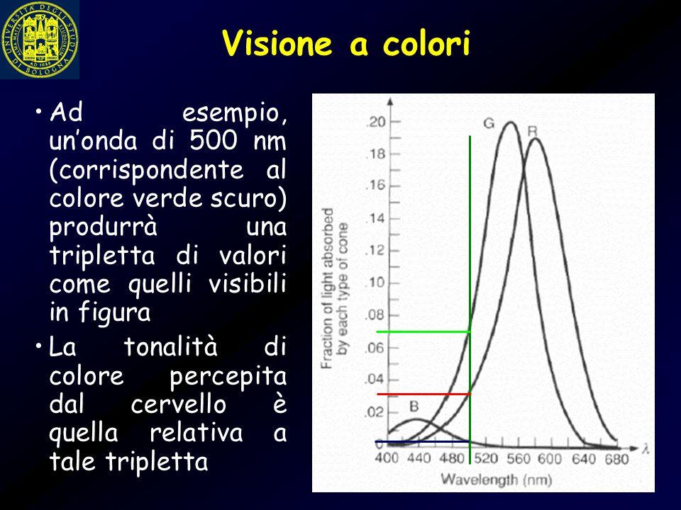 Visione a colori Ad esempio, un'onda di 500 nm (corrispondente al colore verde scuro) produrrà una tripletta di valori come quelli visibili in figura.