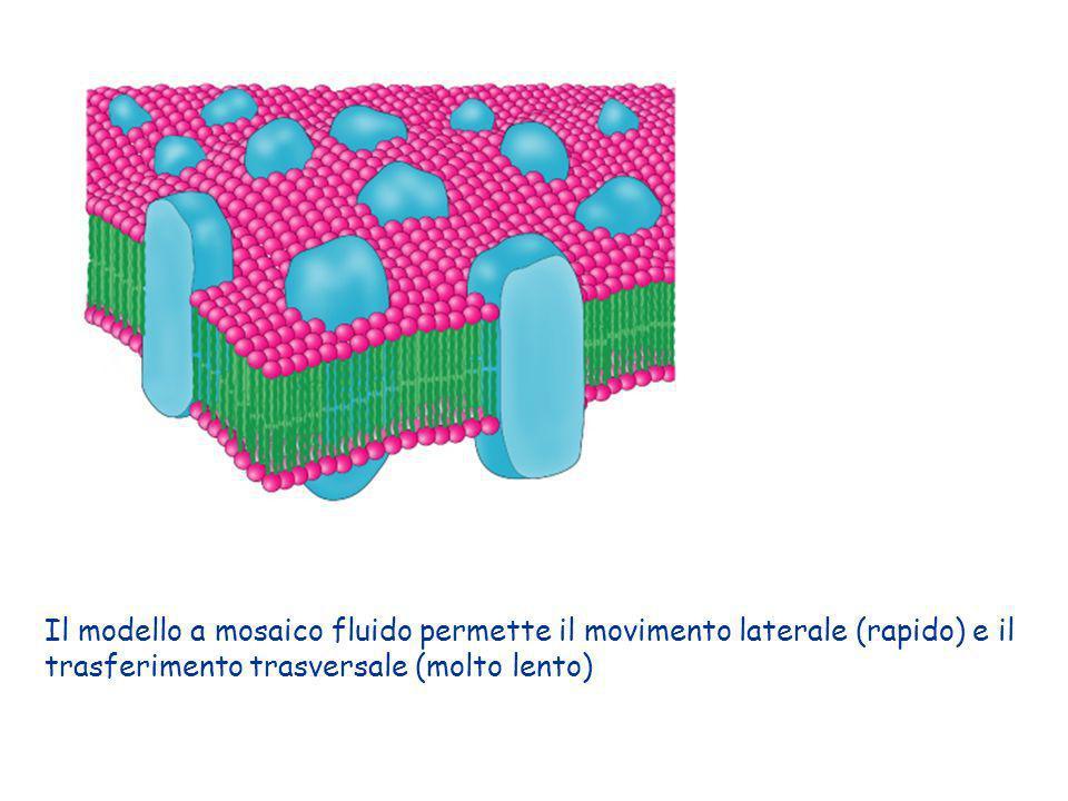 Il modello a mosaico fluido permette il movimento laterale (rapido) e il