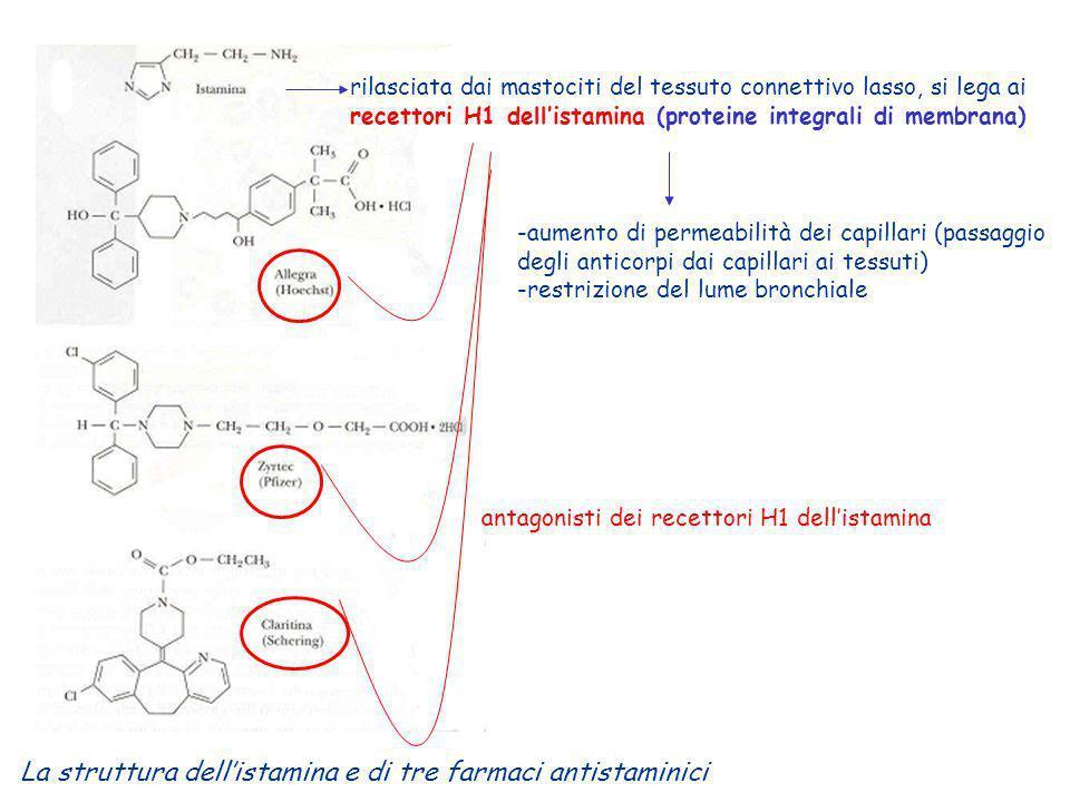 La struttura dell'istamina e di tre farmaci antistaminici