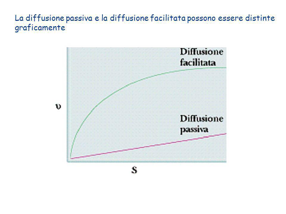 La diffusione passiva e la diffusione facilitata possono essere distinte