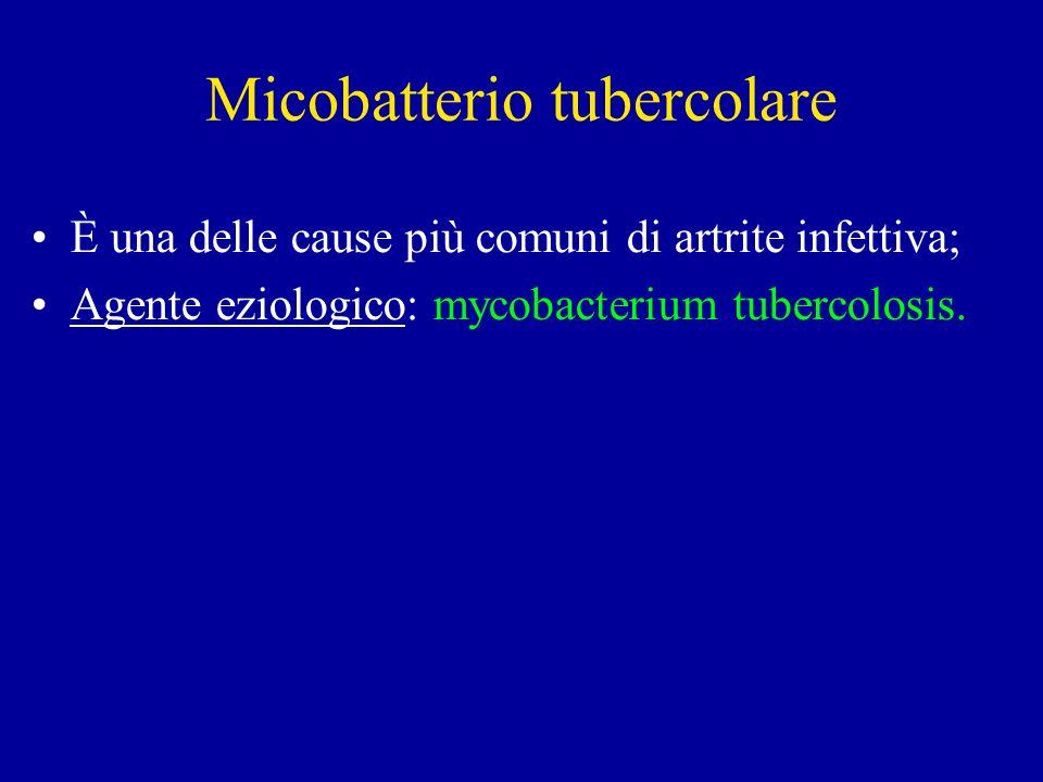 Micobatterio tubercolare