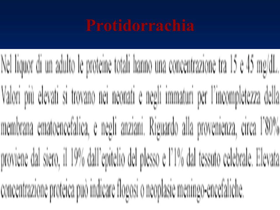 Protidorrachia