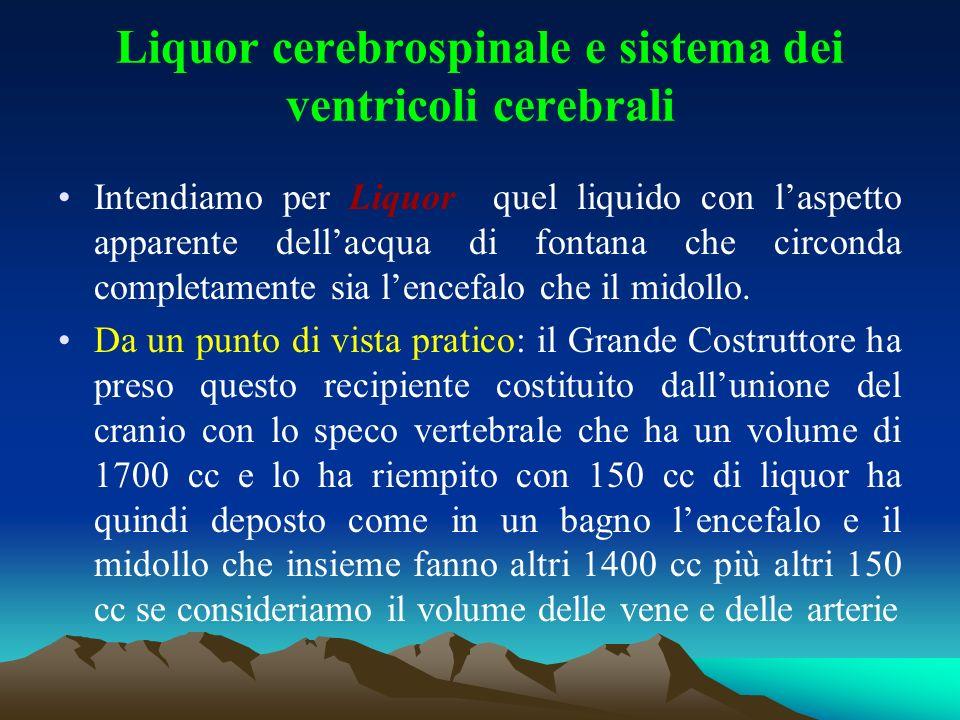 Liquor cerebrospinale e sistema dei ventricoli cerebrali