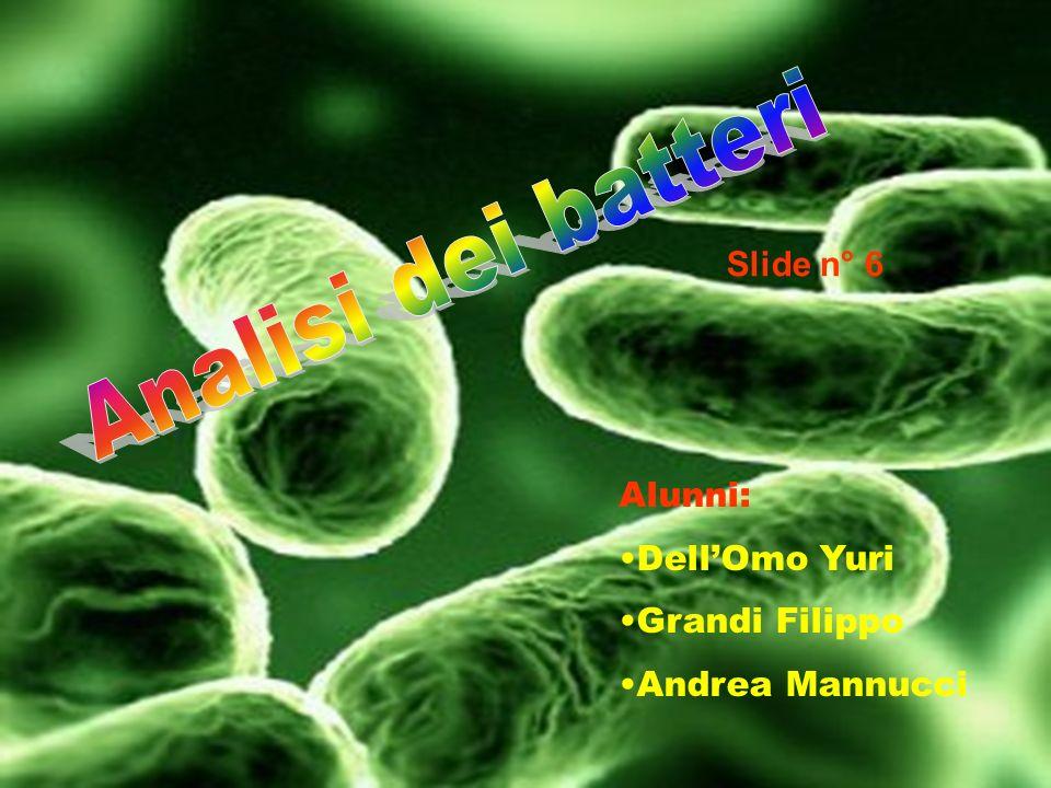 Analisi dei batteri Slide n° 6 Alunni: Dell'Omo Yuri Grandi Filippo