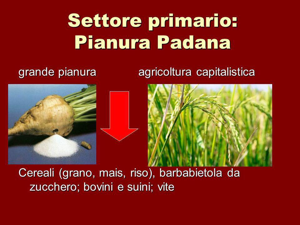 Settore primario: Pianura Padana