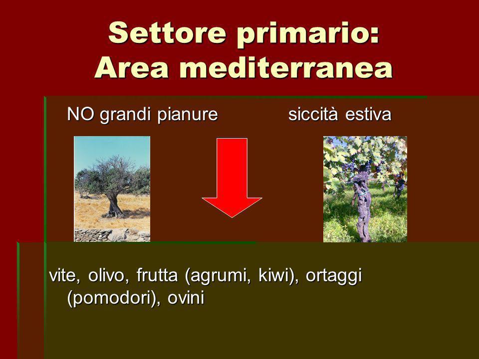 Settore primario: Area mediterranea
