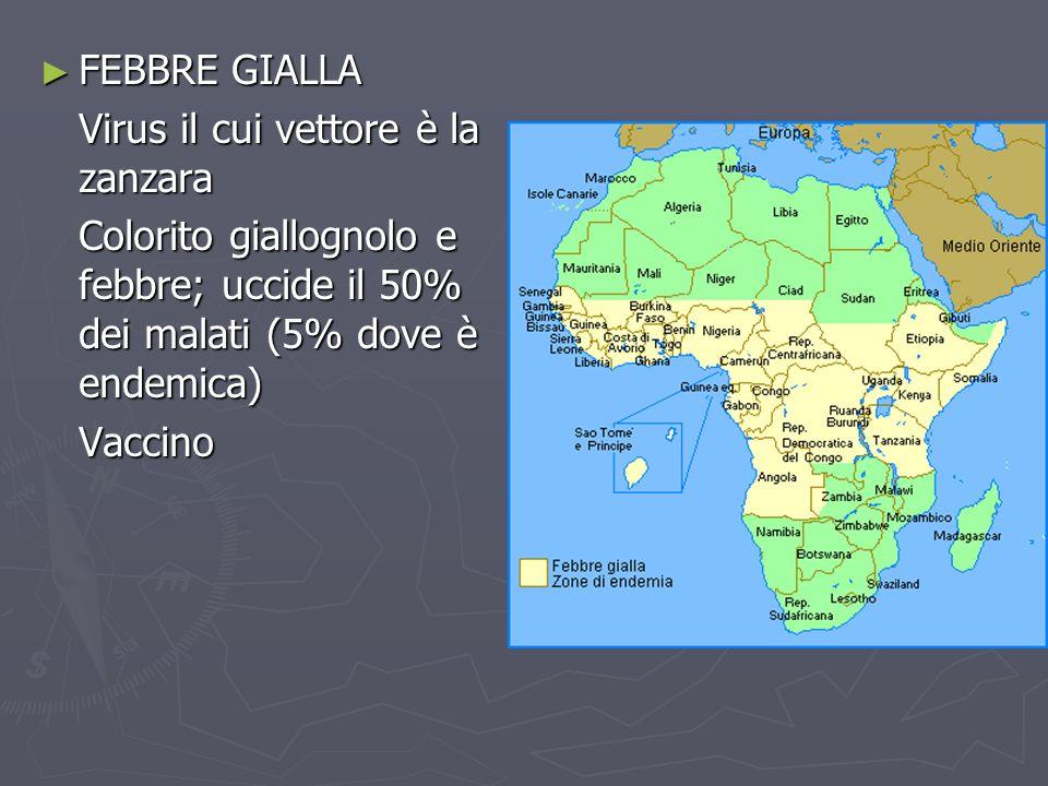 FEBBRE GIALLA Virus il cui vettore è la zanzara. Colorito giallognolo e febbre; uccide il 50% dei malati (5% dove è endemica)