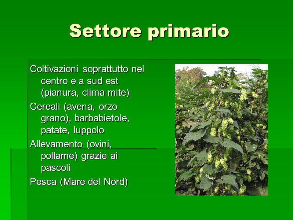 Settore primario Coltivazioni soprattutto nel centro e a sud est (pianura, clima mite) Cereali (avena, orzo grano), barbabietole, patate, luppolo.
