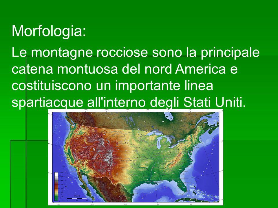 Morfologia: