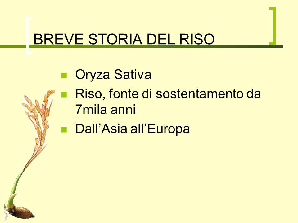 BREVE STORIA DEL RISO Oryza Sativa