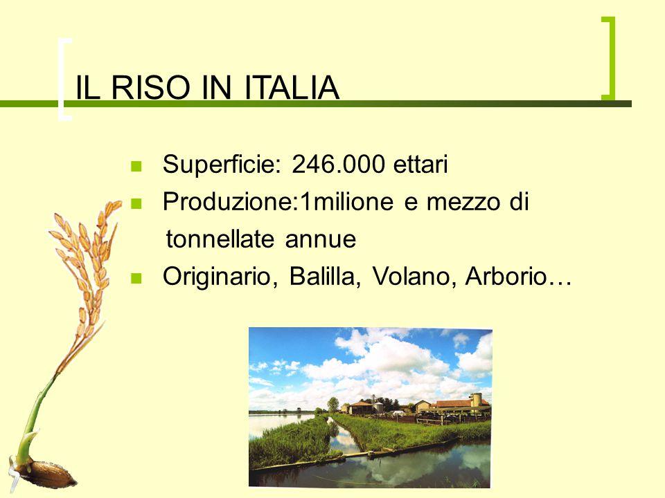 IL RISO IN ITALIA Superficie: 246.000 ettari