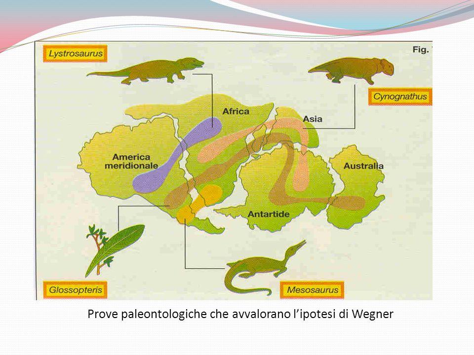 Prove paleontologiche che avvalorano l'ipotesi di Wegner