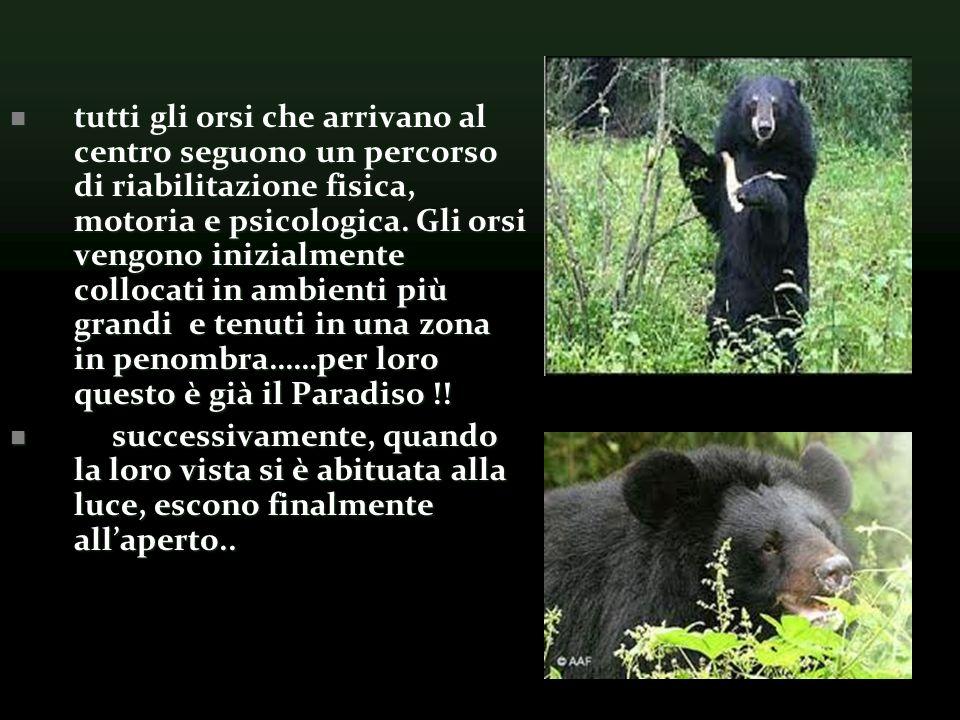 tutti gli orsi che arrivano al centro seguono un percorso di riabilitazione fisica, motoria e psicologica. Gli orsi vengono inizialmente collocati in ambienti più grandi e tenuti in una zona in penombra……per loro questo è già il Paradiso !!