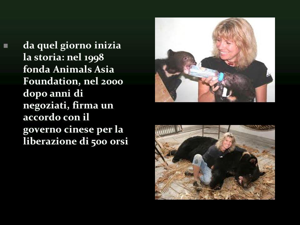 da quel giorno inizia la storia: nel 1998 fonda Animals Asia Foundation, nel 2000 dopo anni di negoziati, firma un accordo con il governo cinese per la liberazione di 500 orsi