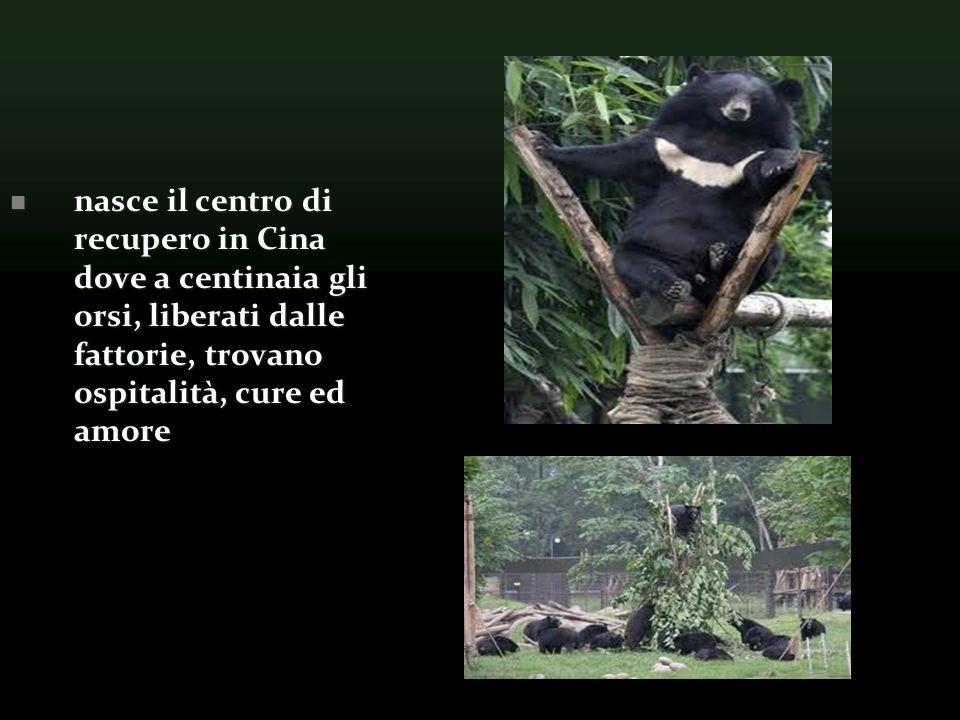 nasce il centro di recupero in Cina dove a centinaia gli orsi, liberati dalle fattorie, trovano ospitalità, cure ed amore