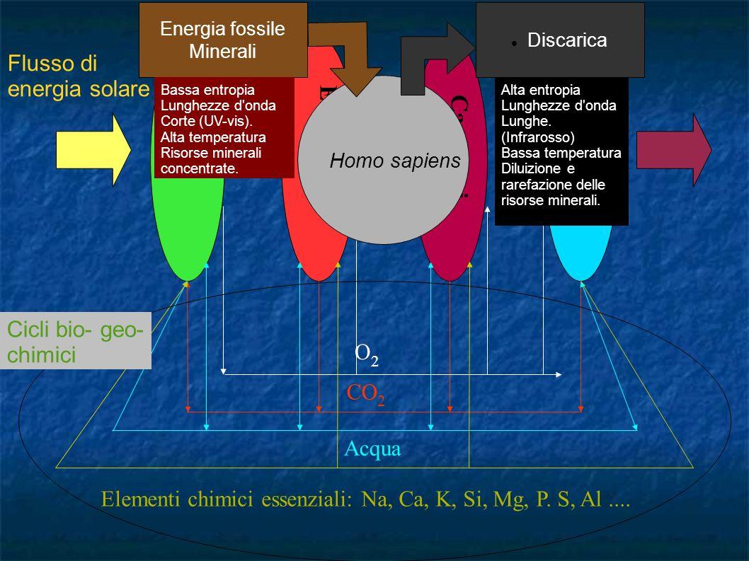 Erbivori Piante Carnivori Batteri Flusso di energia solare