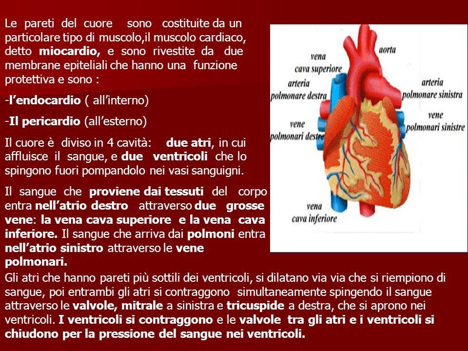 Le pareti del cuore sono costituite da un particolare tipo di muscolo,il muscolo cardiaco, detto miocardio, e sono rivestite da due membrane epiteliali che hanno una funzione protettiva e sono :