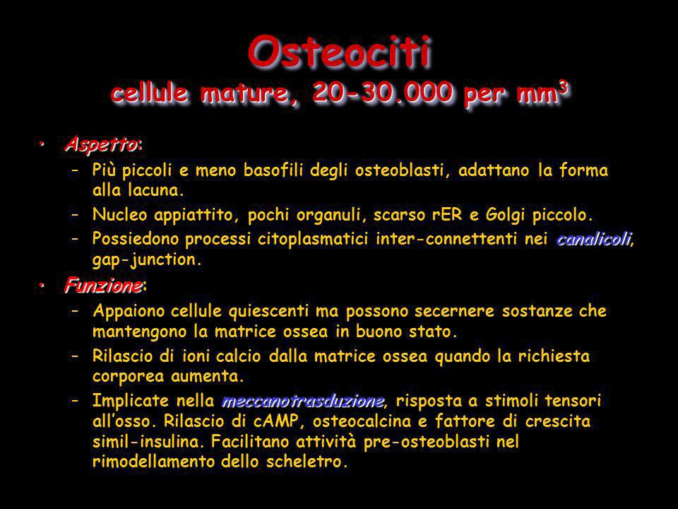 Osteociti cellule mature, 20-30.000 per mm3