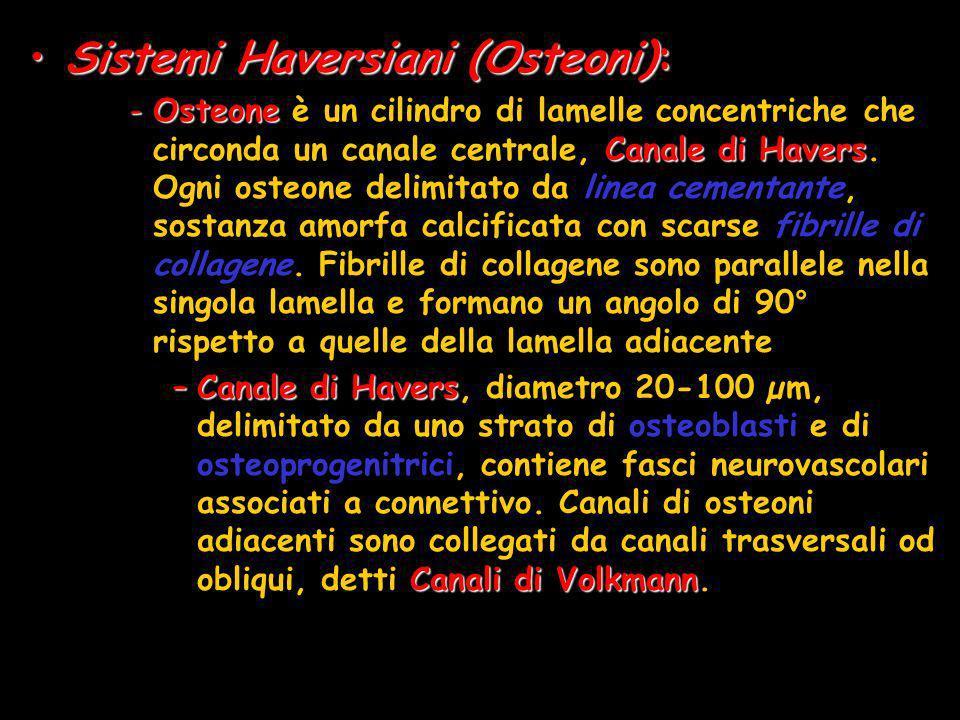 Sistemi Haversiani (Osteoni):