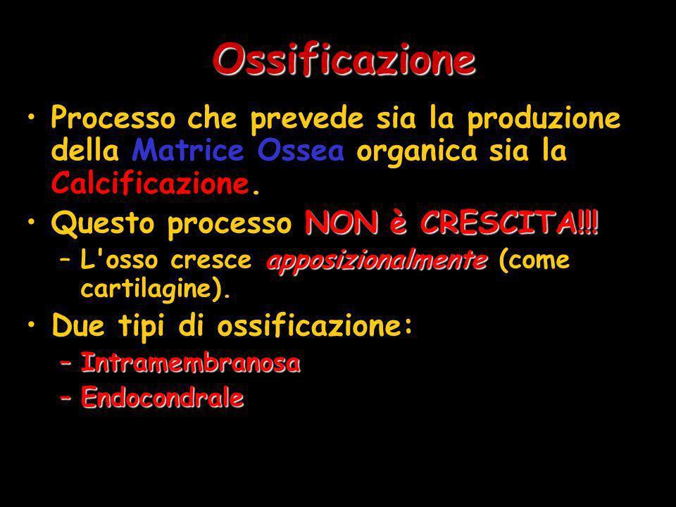 OssificazioneProcesso che prevede sia la produzione della Matrice Ossea organica sia la Calcificazione.