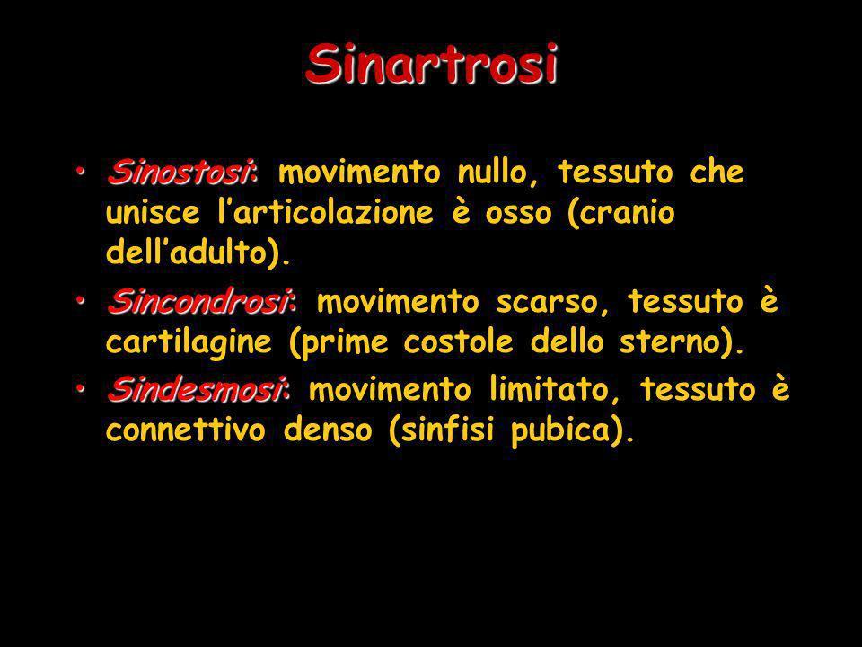 Sinartrosi Sinostosi: movimento nullo, tessuto che unisce l'articolazione è osso (cranio dell'adulto).