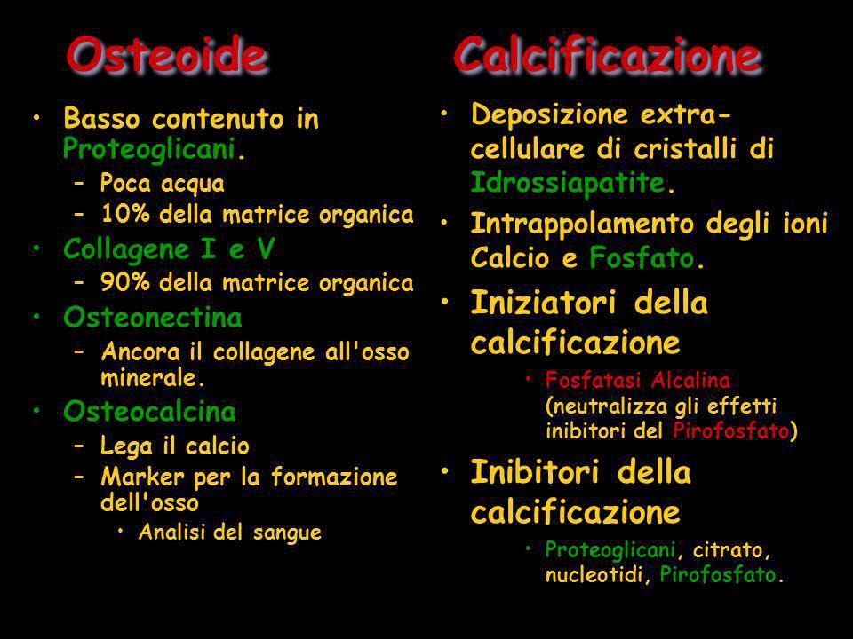 Osteoide Calcificazione