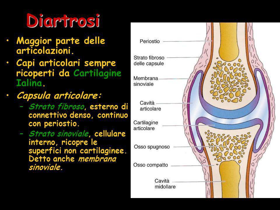 Diartrosi Maggior parte delle articolazioni.