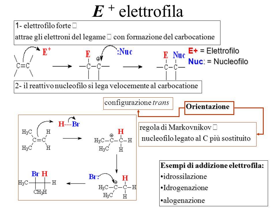 E + elettrofila 1- elettrofilo forte →