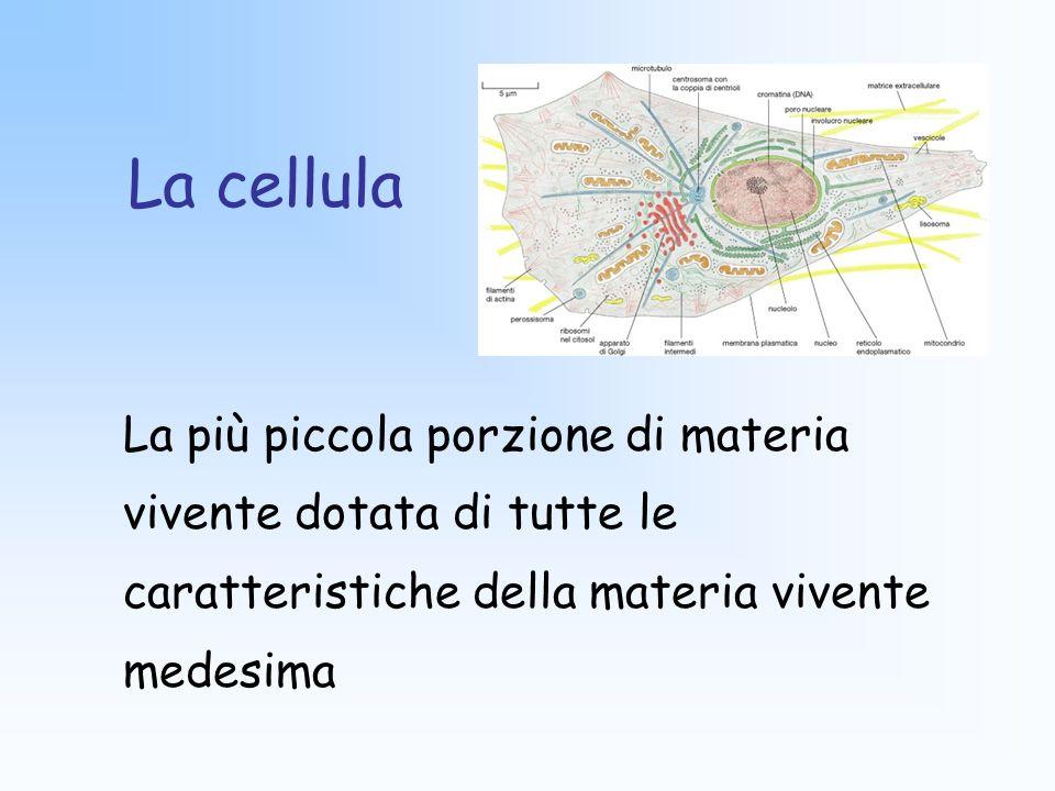 La cellula La più piccola porzione di materia vivente dotata di tutte le caratteristiche della materia vivente medesima.