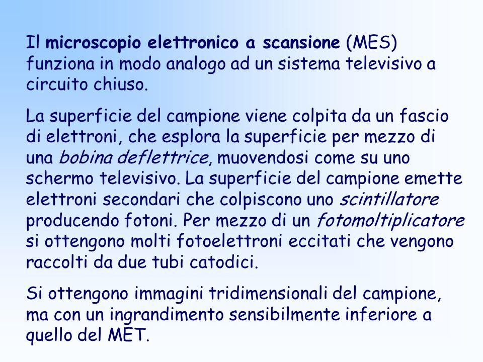 Il microscopio elettronico a scansione (MES) funziona in modo analogo ad un sistema televisivo a circuito chiuso.