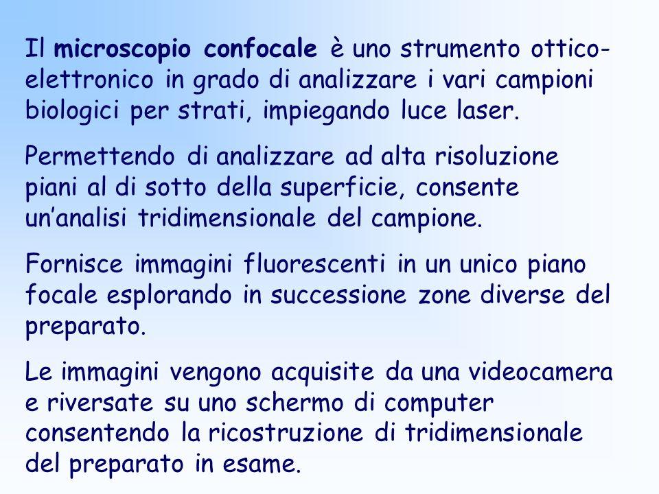 Il microscopio confocale è uno strumento ottico-elettronico in grado di analizzare i vari campioni biologici per strati, impiegando luce laser.