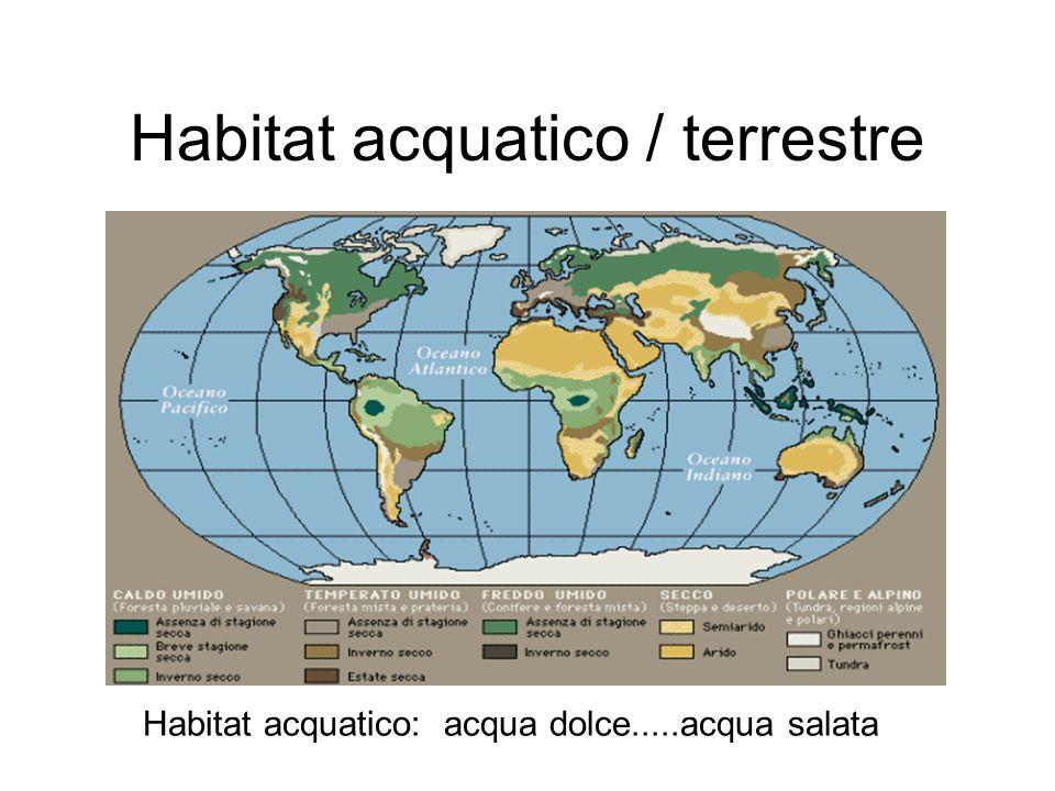 Habitat acquatico / terrestre